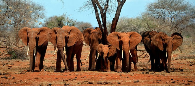 Did you know paper can be made from elephant poo?